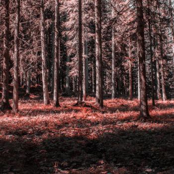 fotos daltonismo (12)