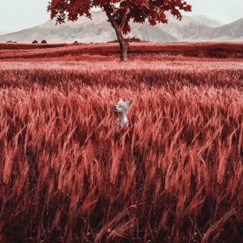 fotos daltonismo (7)