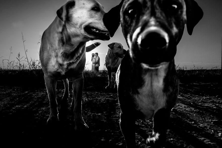 photobomb animales (2)