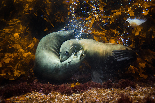 'Fotógrafo internacional de naturaleza del año': Philip Thurston, Australia.