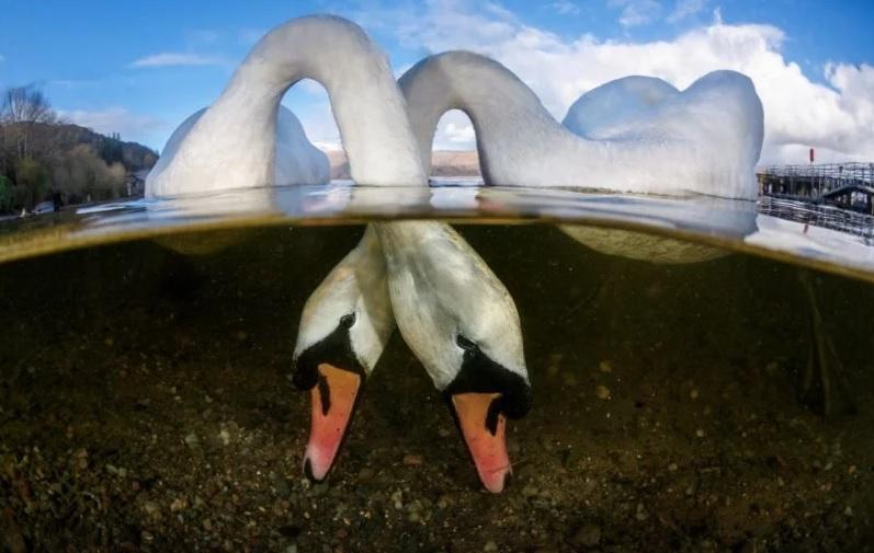 'Love Birds' por Grant Thomas (Reino Unido)