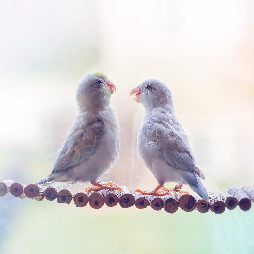 Fotógrafa documenta el amor de sus periquitos