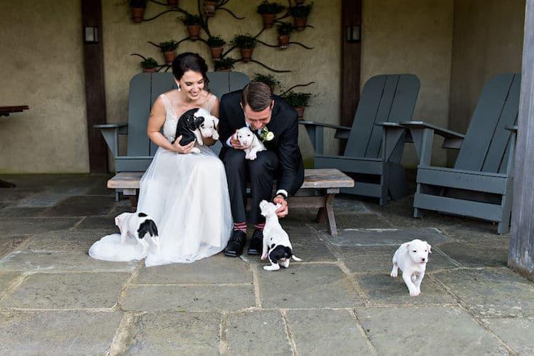 pareja cachorros como ramo (1)