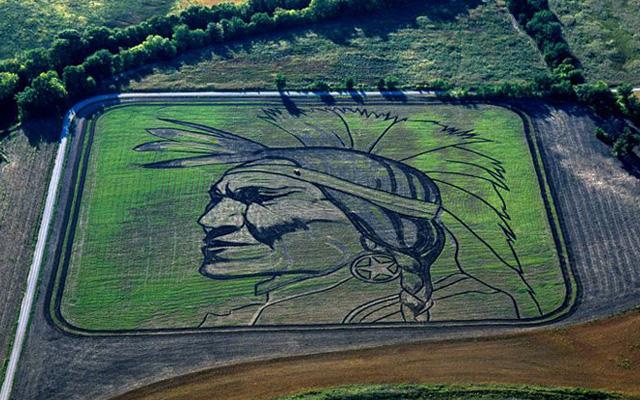 arte en cultivos