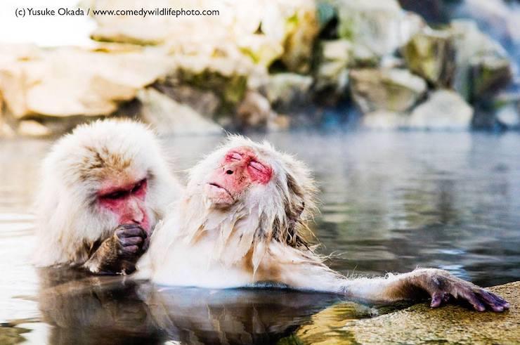 Wildlife Comedy Photo (2)