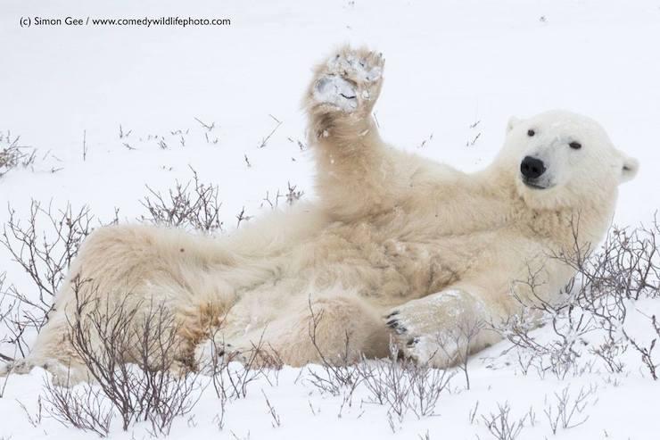 Wildlife Comedy Photo (3)