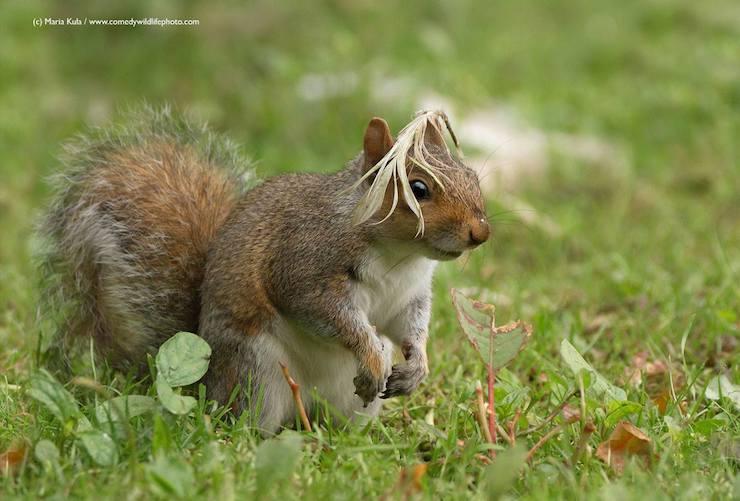 Wildlife Comedy Photo (4)