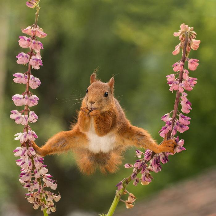 Wildlife Comedy Photo (5)