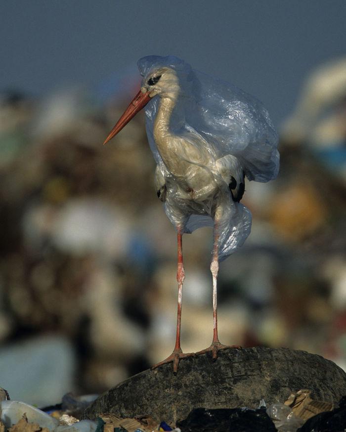 fotos de Nat Geo para crear conciencia sobre la contaminación