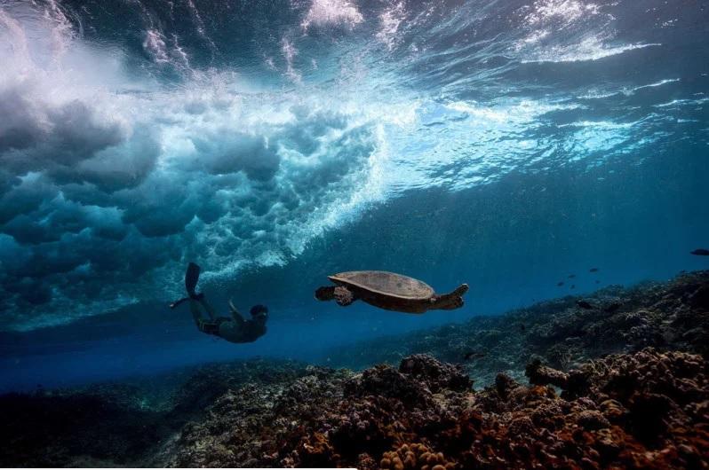 fotografías submarinas por Matt Porteous