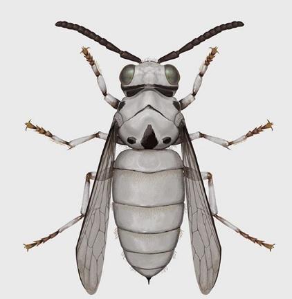 diseños de insectos inspirados en personajes de Star Wars