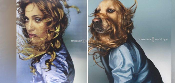 Fotógrafo recrea álbumes de Madonna con su perro