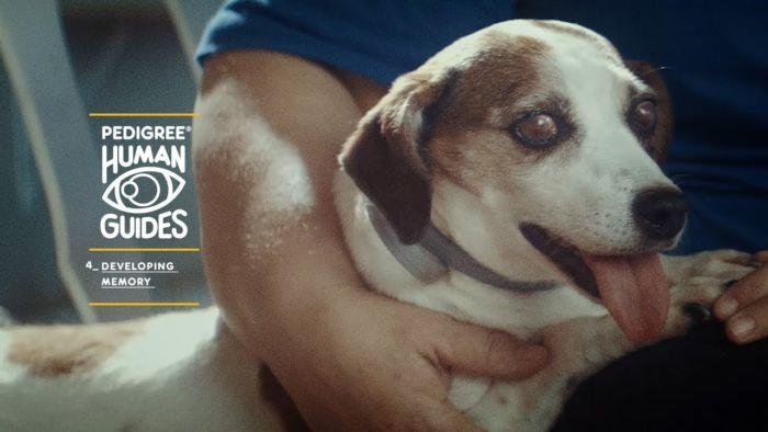 Campaña de conciencia sobre la discapacidad visual en los perros