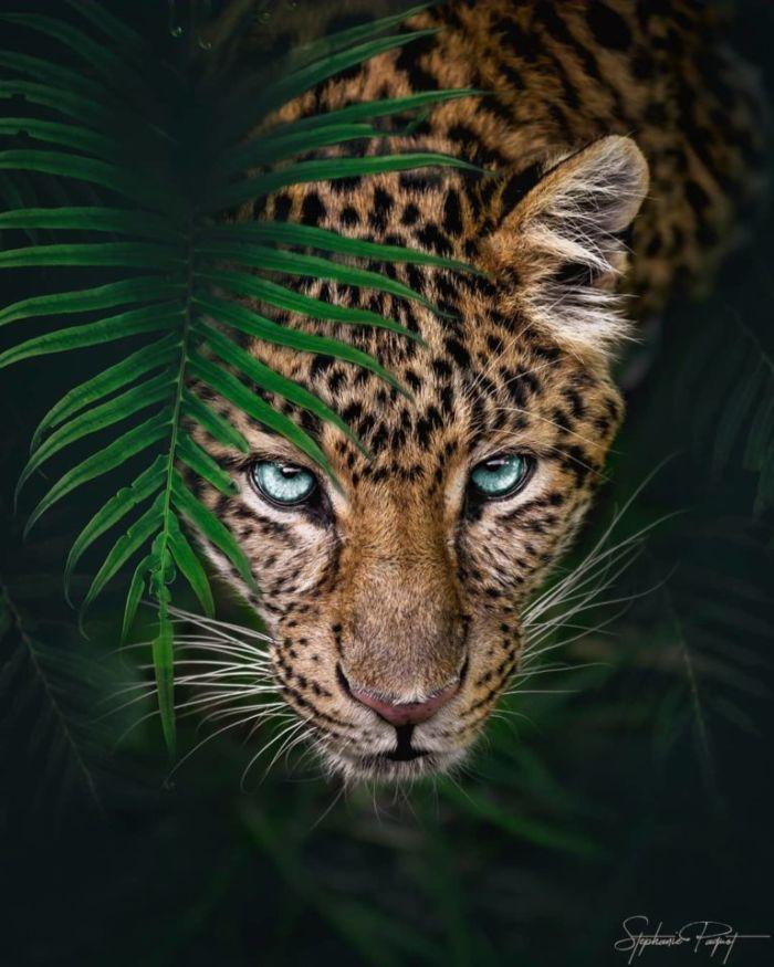 Creativos Montajes Fotográficos De Animales Por Sté Frogx Three