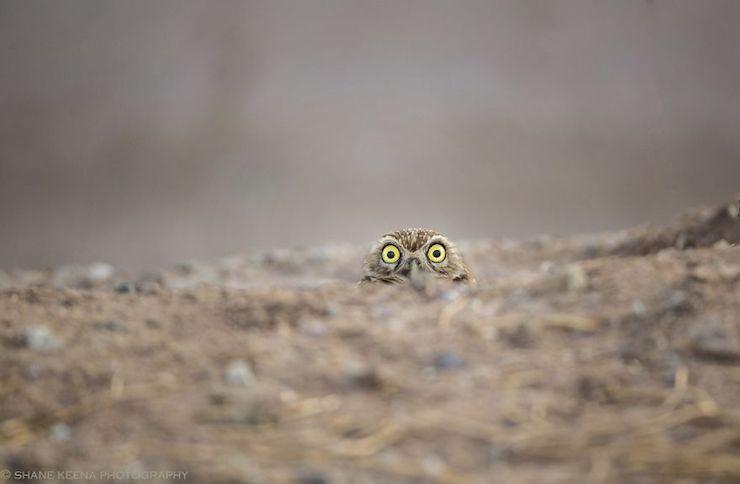 Fotos Ganadoras Del Comedy Wildlife Photography 2018