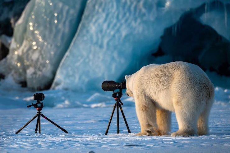 Wildlife Photograbear por Roie Galitz
