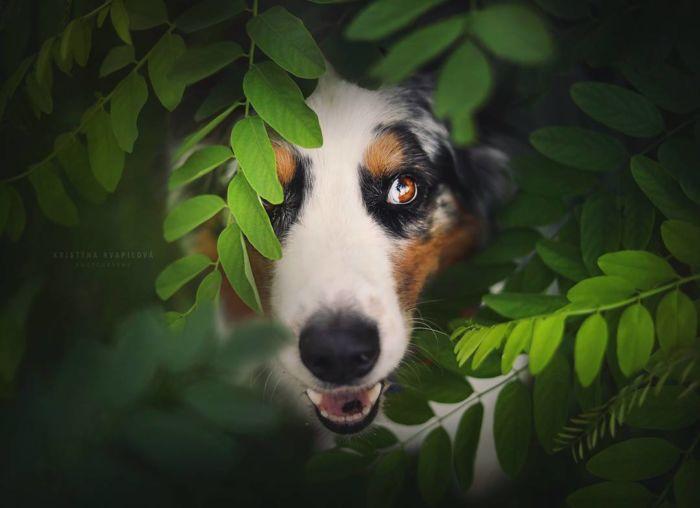 as-belissimas-fotografias-caninas-de-kristyna-kvapilova-1