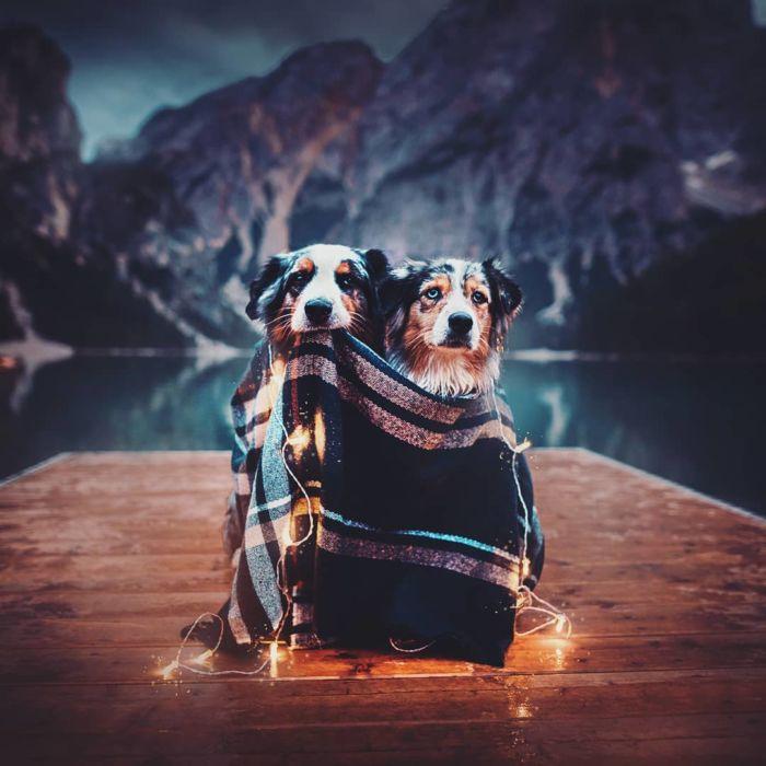 as-belissimas-fotografias-caninas-de-kristyna-kvapilova-10