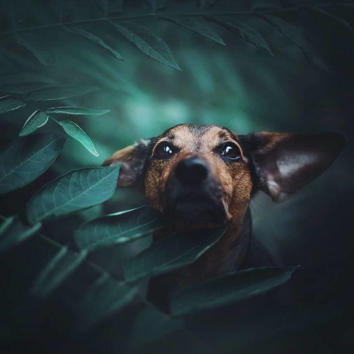 as-belissimas-fotografias-caninas-de-kristyna-kvapilova-11