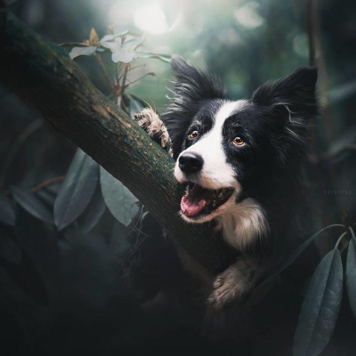 as-belissimas-fotografias-caninas-de-kristyna-kvapilova-12