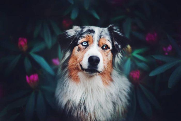 as-belissimas-fotografias-caninas-de-kristyna-kvapilova-14