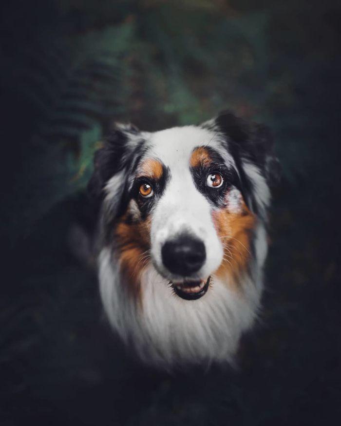 as-belissimas-fotografias-caninas-de-kristyna-kvapilova-15