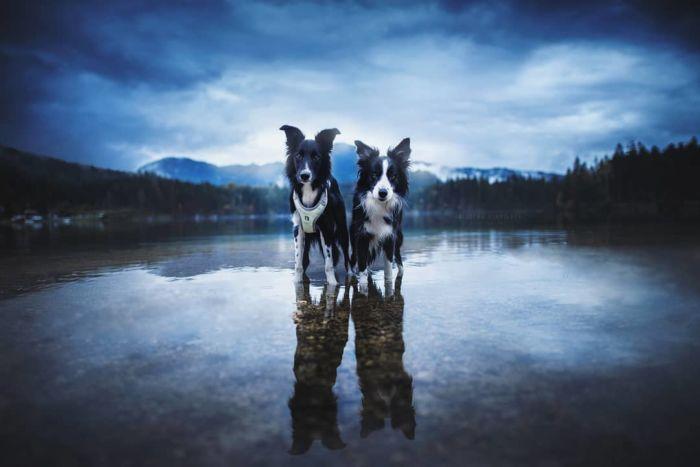 as-belissimas-fotografias-caninas-de-kristyna-kvapilova-16