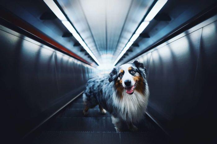 as-belissimas-fotografias-caninas-de-kristyna-kvapilova-17