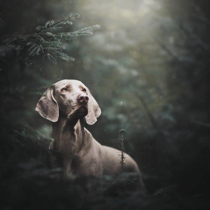 as-belissimas-fotografias-caninas-de-kristyna-kvapilova-18