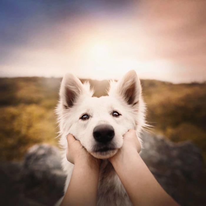as-belissimas-fotografias-caninas-de-kristyna-kvapilova-2