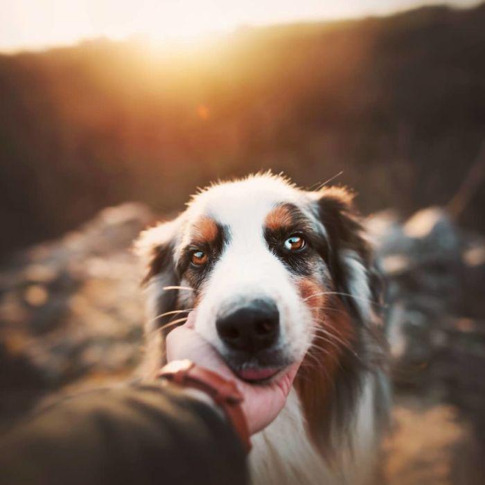 as-belissimas-fotografias-caninas-de-kristyna-kvapilova-3