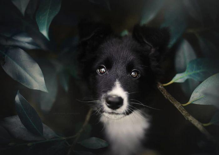 retratos caninos para tu inspiración por Kristýna Kvapilová