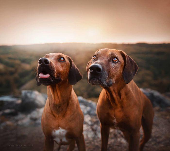 as-belissimas-fotografias-caninas-de-kristyna-kvapilova-5
