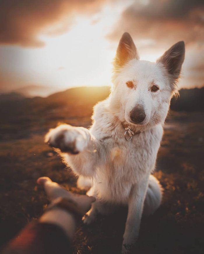 as-belissimas-fotografias-caninas-de-kristyna-kvapilova-6