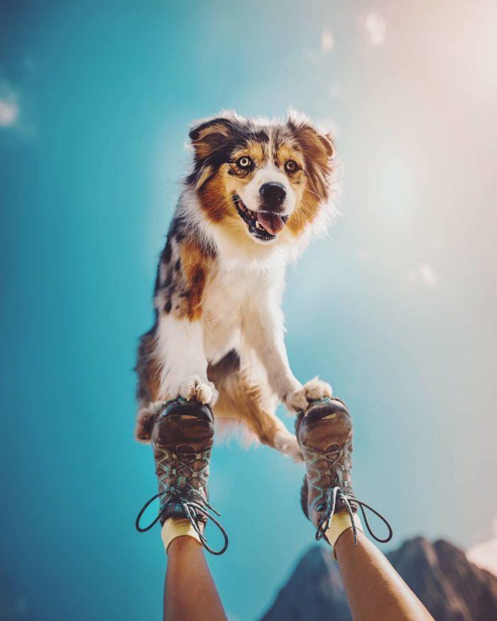 as-belissimas-fotografias-caninas-de-kristyna-kvapilova-7