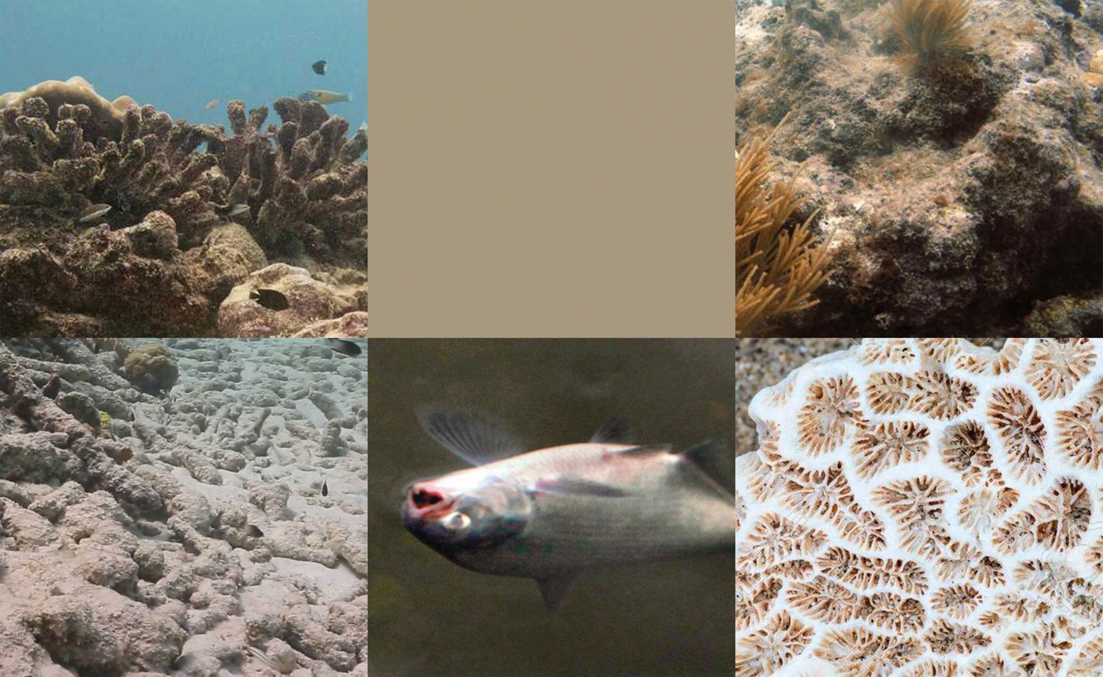 Dead Coral Pantone 2043