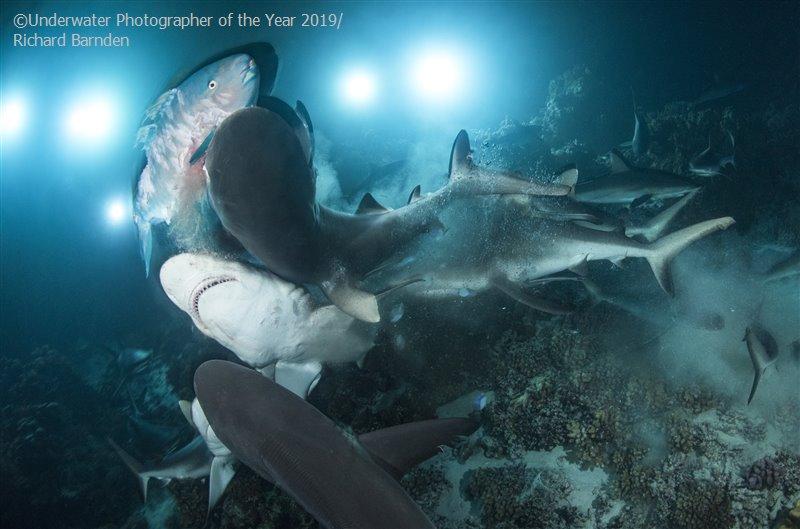 Fotos ganadoras del Underwater photographer 2019