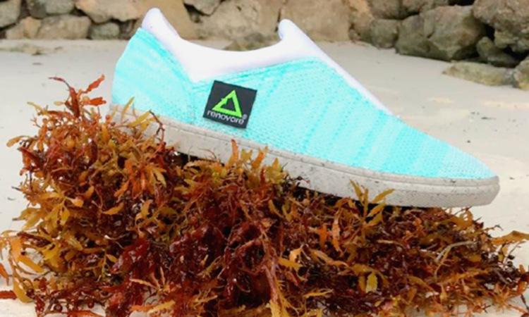 zapatos ecológicos hechos con sargazo