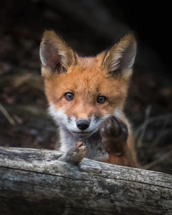Fotografías de animales silvestres