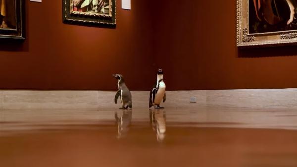 Pingüinos van de excursión al museo