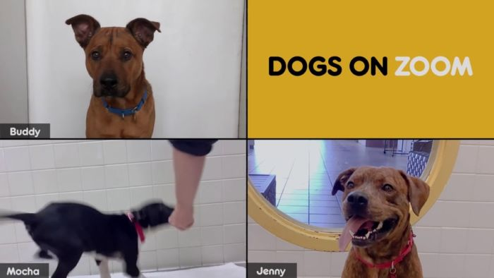 Dogs on Zoom
